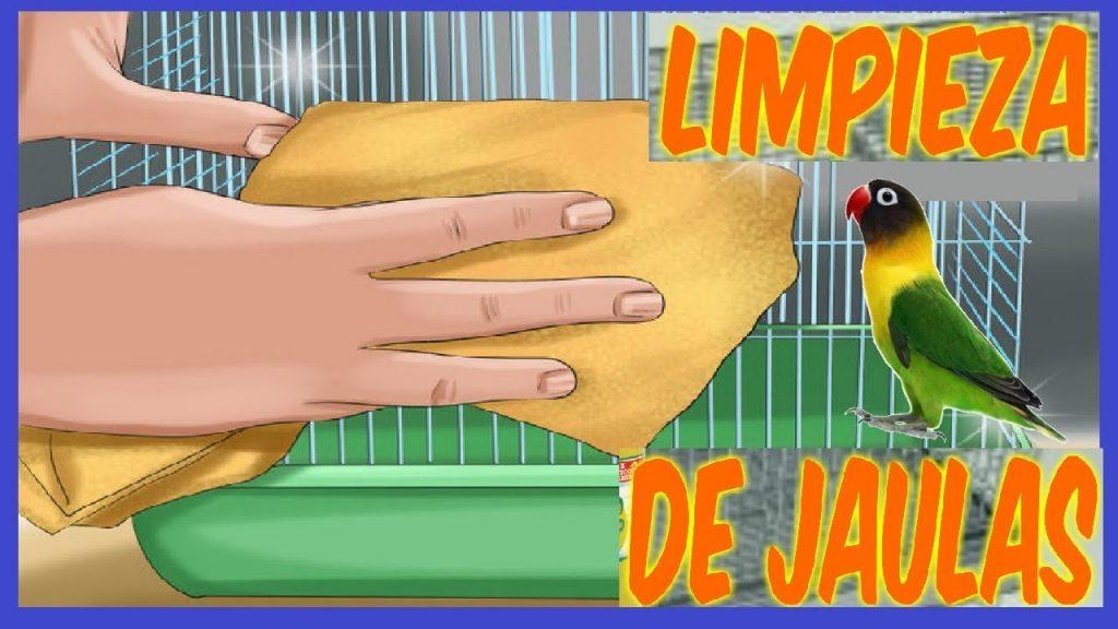 limpieza-jaula-agapornis