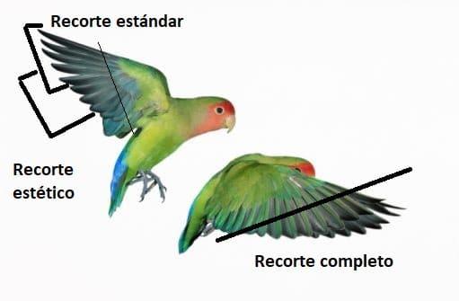 recorte-alas-inseparable